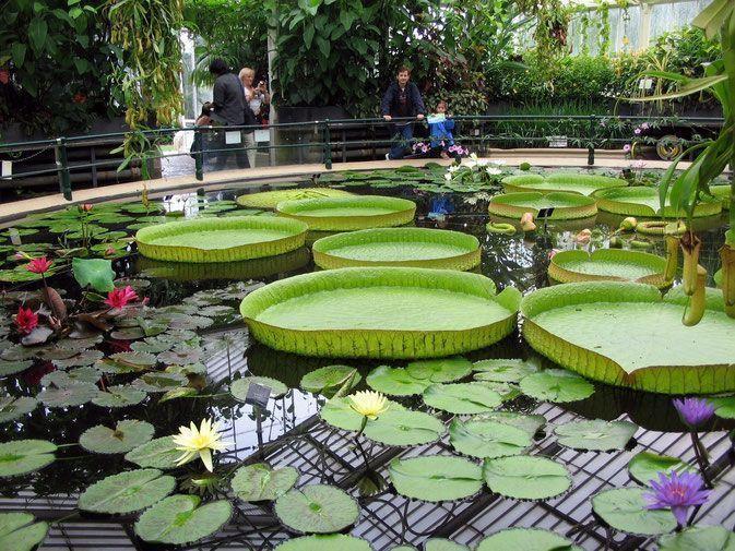 Los Kew gardens o jardines de la reina, Londres