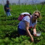 La gastronomía ecológica y el turismo sostenible