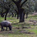 La sierra de Huelva la cuna del jamón Ibérico