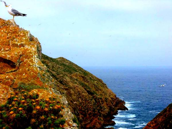 reserva natural de las islas berlanga (1)