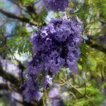 Turismo de floración: El ecoturismo de primavera