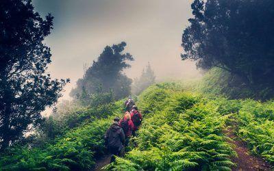 Turismo responsable en Tenerife: la isla verde