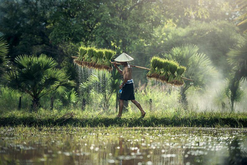 Viajar a Tailandia como un viajero responsable